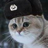 Gato Soviético/Soviet Cat