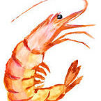 Shrimpy5678